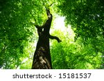 forest tree. nature green wood... | Shutterstock . vector #15181537
