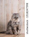 Fluffy Grey Persian Cat  Cute...