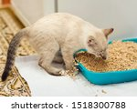 Kitty Digging In A Cat Litter