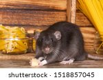 The Black Fluffy Rat Is A...