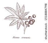 vector drawing castor plant ...   Shutterstock .eps vector #1518884798