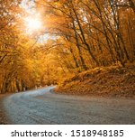 Asphalt Road In Autumn Forest....