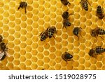 Working Bees Fill Honeycombs...