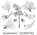 set of various oak leaves and ... | Shutterstock .eps vector #1519067762
