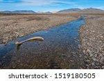 Mammoth Tusk In A Riverbed Nea...