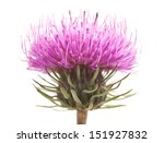 Thistles Flower Isolated On...