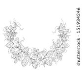 hop garland on a white... | Shutterstock . vector #151934246