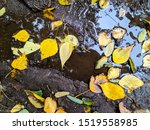 Autumn Leaves In A Dirty Puddle.