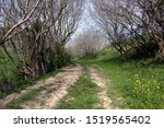 Path Among Flowering Trees In...