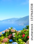 Small photo of Colorful Hydrangea flowers and the beautiful northern coast of Madeira Island, Portugal. Typical Hortensia flower. Amazing coast by Ribeira da Janela. Atlantic ocean landscape. Haze in background.