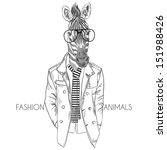 fashion illustration of zebra...   Shutterstock .eps vector #151988426