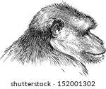 monkey | Shutterstock .eps vector #152001302