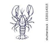 Lobster Vector Hand Drawn...