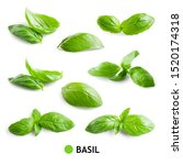 Basil Isolated. Basil Leaf On...