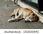 abandoned homeless stray dog... | Shutterstock . vector #152033492