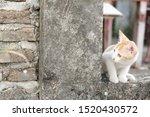 Stock photo cute little red kitten playing outdoor portrait of red kitten in ruin looking interesting tabby 1520430572