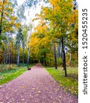 Small photo of Autumn park alley scene view. Autumn park alley view. Autumn in city park. Autumn city park alley view