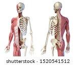 Human Male Anatomy  3 4 Figure...