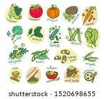 vegetable hand drawn vector...   Shutterstock .eps vector #1520698655