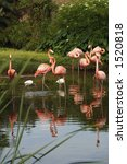 Group Of Pink Flamingos In A...