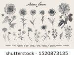 vintage vector botanical... | Shutterstock .eps vector #1520873135