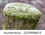 Frost Covered Moss On A Wooden...