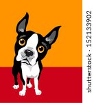 Illustration of a Boston Terrier Dog - stock vector