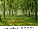nature tree flower and landscape | Shutterstock . vector #152169698