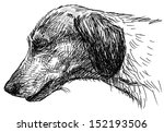 head of  dachshund | Shutterstock . vector #152193506
