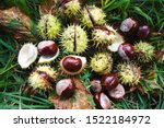 Brown Horse Chestnuts  ...