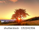 alone tree | Shutterstock . vector #152241506