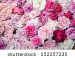 Stock photo background image of pink french roses 152257235