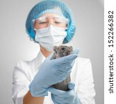 Veterinarian woman holding a rat - stock photo