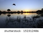 A Yellow Billed Stork Flying...