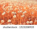 Wild Wildflowers Field   Natur...
