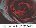 Red Rose In Blue Tone. Closeup...
