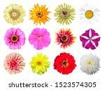 set of beautiful bright flowers.... | Shutterstock . vector #1523574305