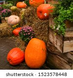 Large Pumpkin On Wet Hay Near...