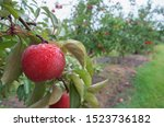 Apple Jack Orchards After The...