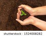 hand holding green plant... | Shutterstock . vector #1524008282
