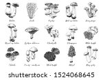 hand drawn mushrooms collection....   Shutterstock .eps vector #1524068645