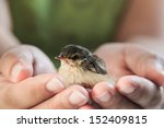 Little Sparrow On The Palm Of...
