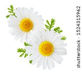 Chamomile Or Camomile Flowers...