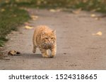 Golden Autumn With Red Lion Cub
