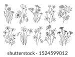 wild flowers. sketch... | Shutterstock . vector #1524599012