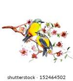 watercolor drawing of cute bird | Shutterstock . vector #152464502