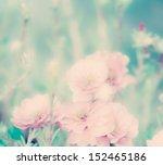 Portulaca Grandiflora Flowers