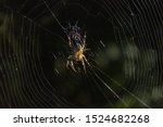 Spider In His Home Spiderweb At ...