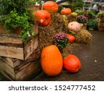 Large Pumpkin On Wet Hay Near...