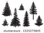 collection of pine tree... | Shutterstock .eps vector #1525275845